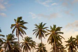 Kokosblüten Zucker