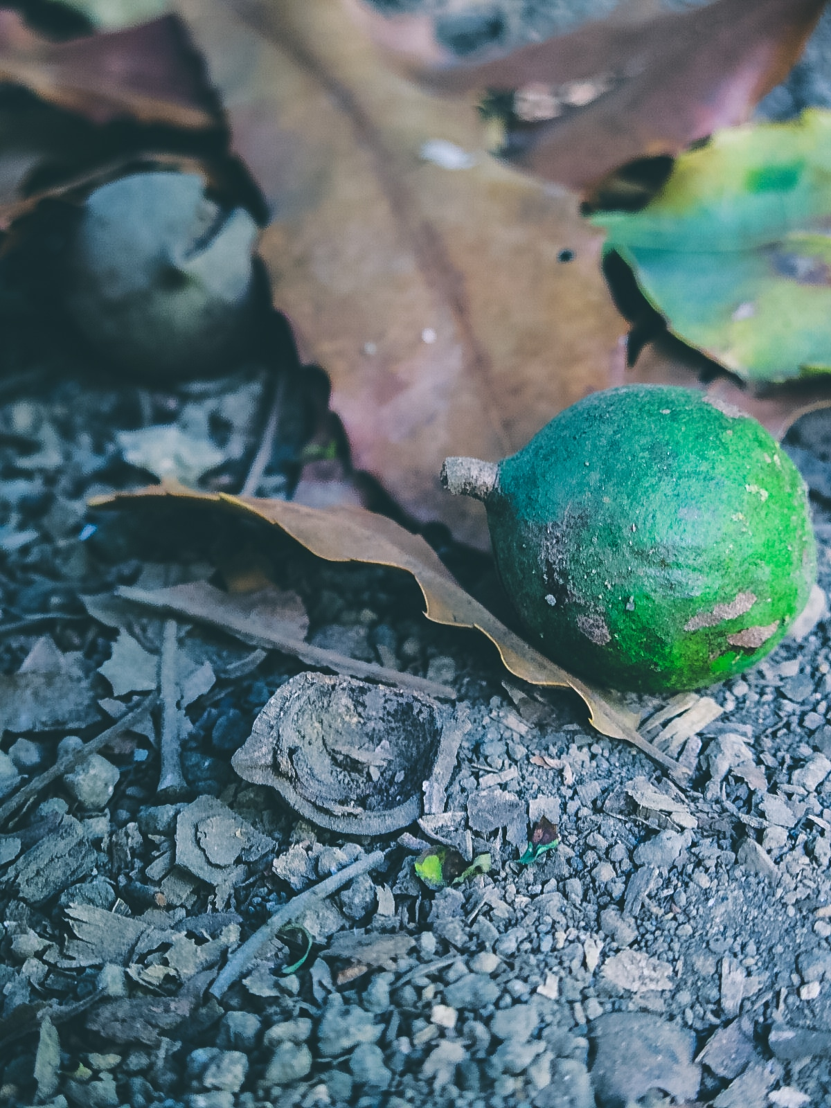 frische Macadamia